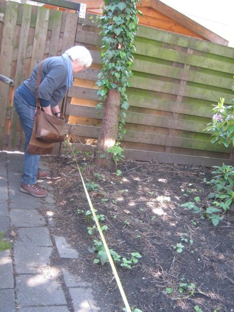 Marilies Jacobs meet de tuin op
