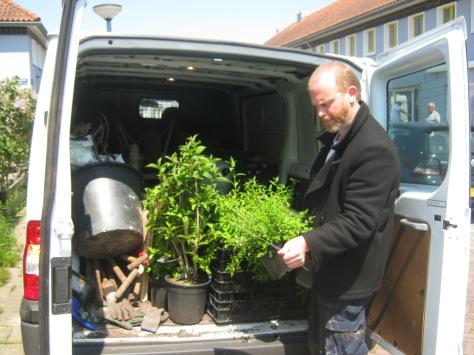 Matthias laat planten uit