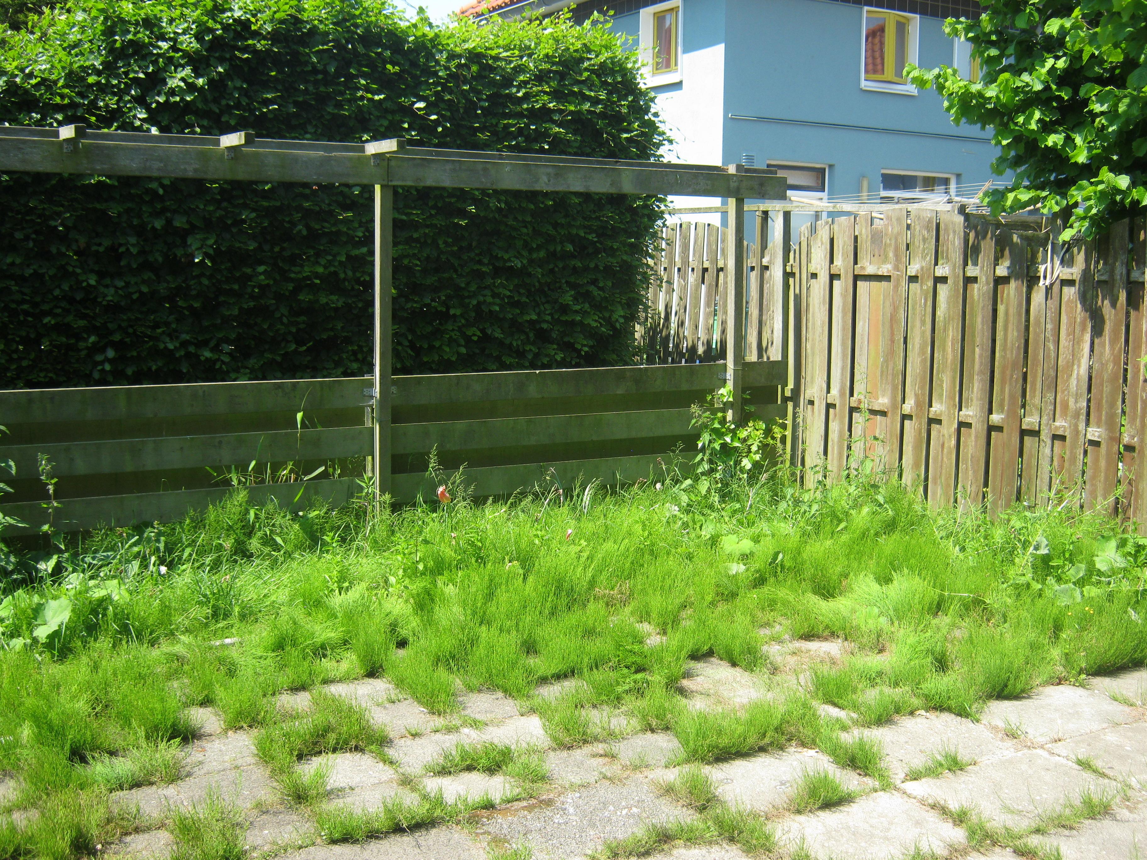 Sociaal tuinieren makeover tuinen bloemenbuurt nederlandse tuinenstichting nts - Tuin van de tuin ...