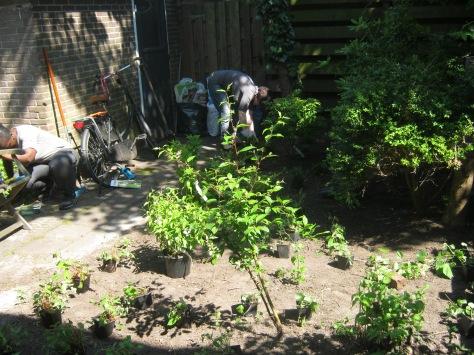 vrijwilligers zetten nieuwe planten in achtertuin