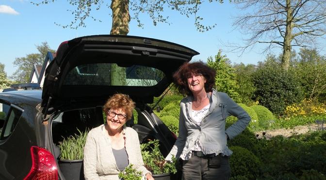 De eerste gedoneerde planten voor ons Sociaal Tuinieren project