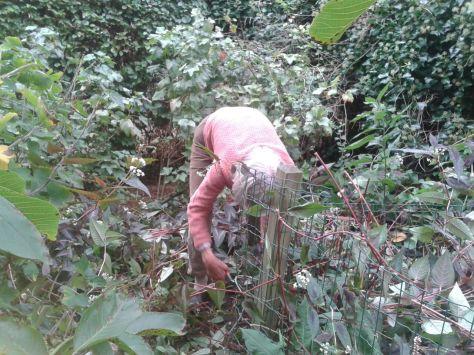 Dieuwke in haar tuin, bezig de planten voor Sociaal Tuinieren uit de grond te halen